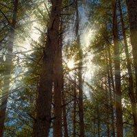 В лесу ... :: Елена Нор