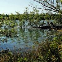 Девственное озеро :: Alexander Andronik