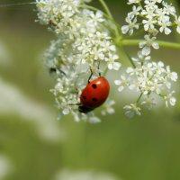 из жизни жука :: Наталья