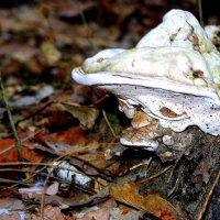 Лесной гном в белом колпаке :: Александр Прокудин