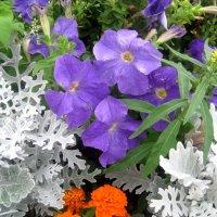 Летние цветы :: Елена Семигина