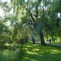 В парке Торонто... :: Юрий Поляков