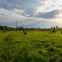 Пейзаж :: Женя Янов