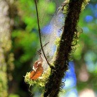 В заповедном лесу :: Размик Марабян