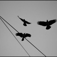 Птицы :: Irina-77 Владимировна