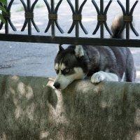 отправился знакомиться с моим псом :: Наталия Руденко