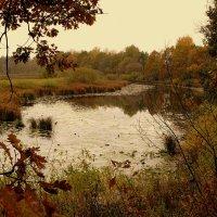 осеннее озеро1 :: Александр Прокудин