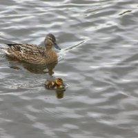 Мама с малышом :: Татьяна_Ш