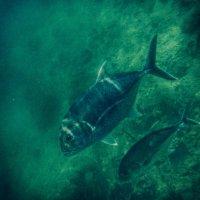 рыбы :: Александр