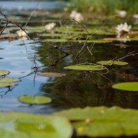 Гладь озера :: Katerina Bondar