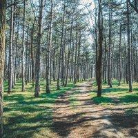 Природа :: Женя Янов