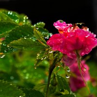 После дождя. :: Валентин Кузьмин