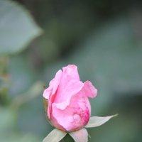 Цветочный хоровод-254. :: Руслан Грицунь