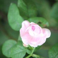 Цветочный хоровод-251. :: Руслан Грицунь