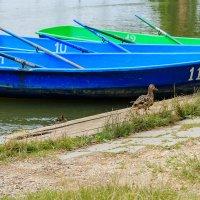 Организованный захват лодок :: Николай Николенко