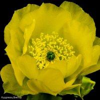 Цветок кактуса :: Виктор Кудрявец