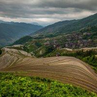 Рисовые террасы Китая :: Андрей Лукашенко