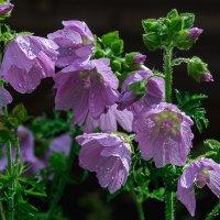 короткий летний дождь :: Galina