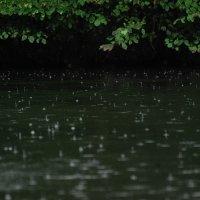 летний дождь :: sergej-smv