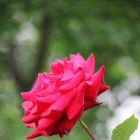 Цветочный хоровод-258. :: Руслан Грицунь