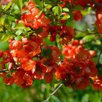 Цветы в нашем саду (этюд 9) :: Константин Жирнов