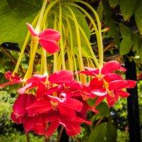 Цветы в парке Ротшильда. Израиль. :: Владимир Сквирский