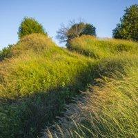 Шум травы :: Сергей Корнев