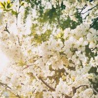 Солнечные цветы :: Ксюша Забуга