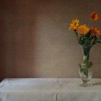 Цветы календулы. :: Елена