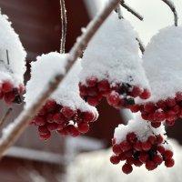 Вспоминая холода :: Николай Танаев