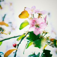 Нежные сны весны.. :: Ирина Сивовол