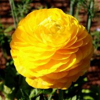 Золотой шар :: Damir Si