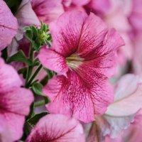 flower_7 :: Trage