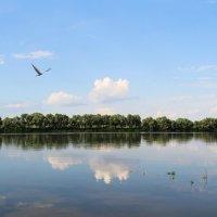 Пролетая над речной гладью. :: Маргарита ( Марта ) Дрожжина