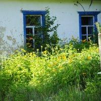 Трава у дома.............. :: Ольга Гукова