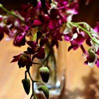 орхидея :: Tatyana Belova