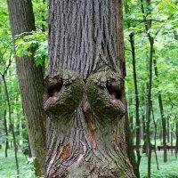 Дерево :: Ирина Крохмаль