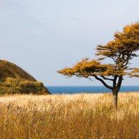 дерево :: Ирина Пантелеева