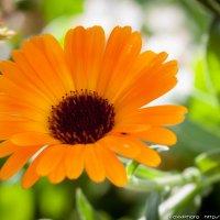 цветы Донецка :: Владимир Коптев