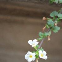 Цветочный хоровод-273. :: Руслан Грицунь