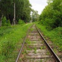 Зеленая ветка :: Андрей Лукьянов