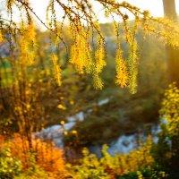 Осенняя 1 :: Черных Ксения