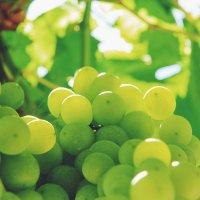 Виноград :: Янина Пименова