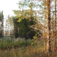 В осеннем лесу :: Рамиль Нигматуллин