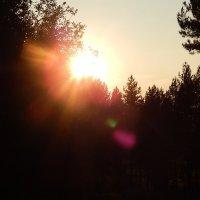 Закат в лесу :: Рамиль Нигматуллин