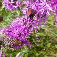Незнакомое насекомое :: Наиля