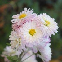 Цветочный хоровод-279. :: Руслан Грицунь