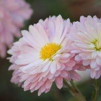 Цветочный хоровод-277. :: Руслан Грицунь