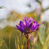 Цветок :: Елена Дорогина