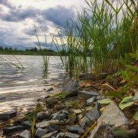 у озера :: Андрей Пашков